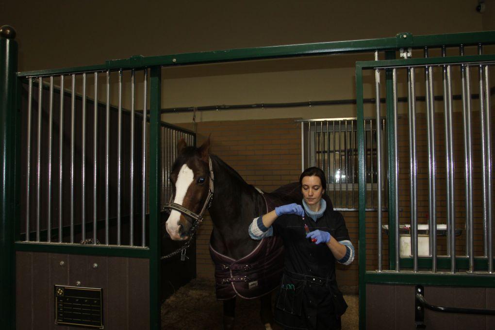 пробы крови от лошади ветеринарный врач ООО Форсайд Фролова Ирина_1
