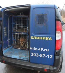 Доставка отловленной бзнадзорной собаки в ветеринарную клинику