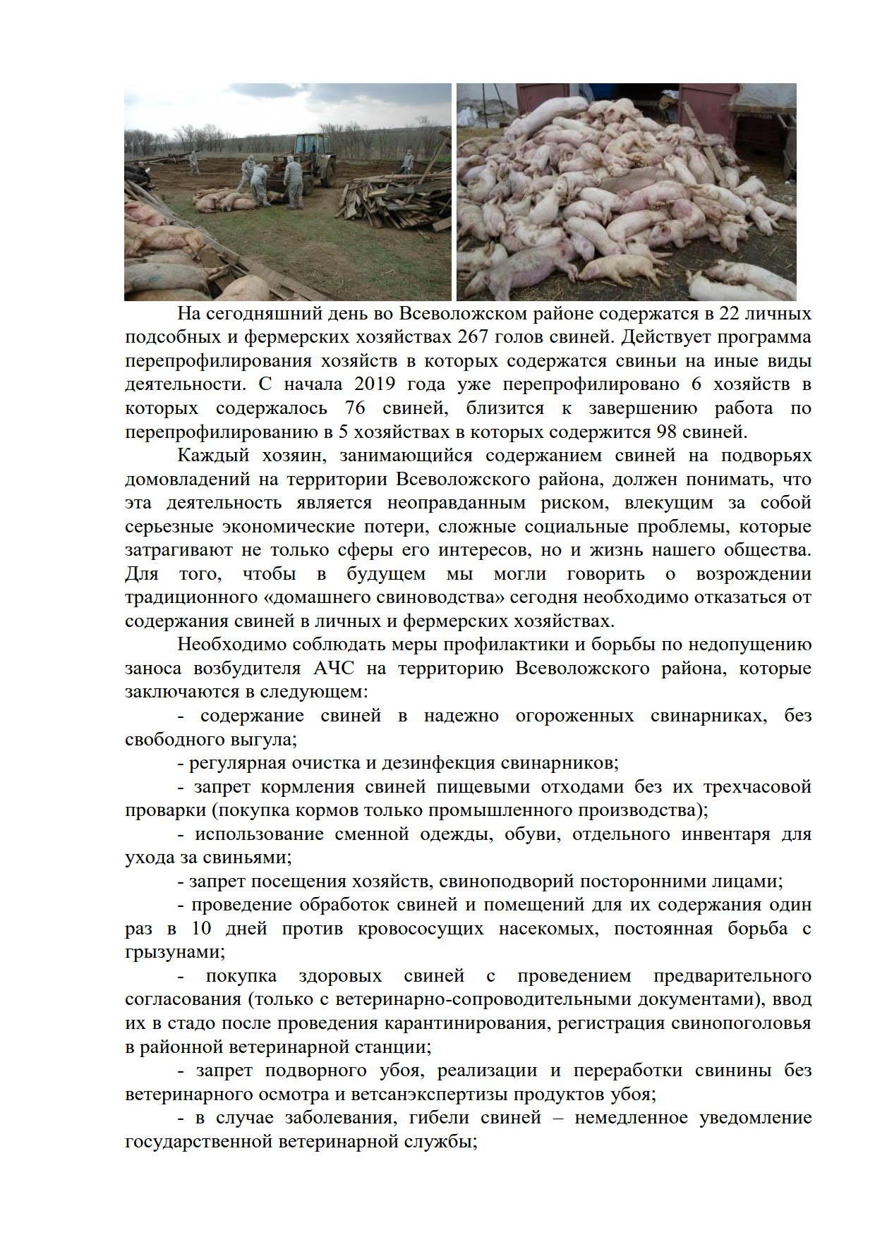 Угроза возникновения африканской чумы свиней во Всеволожском районе не исчезла.статья_3